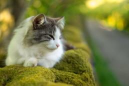 Talisker cat